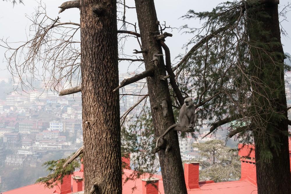 Shimla Travel Expressions Photography 005