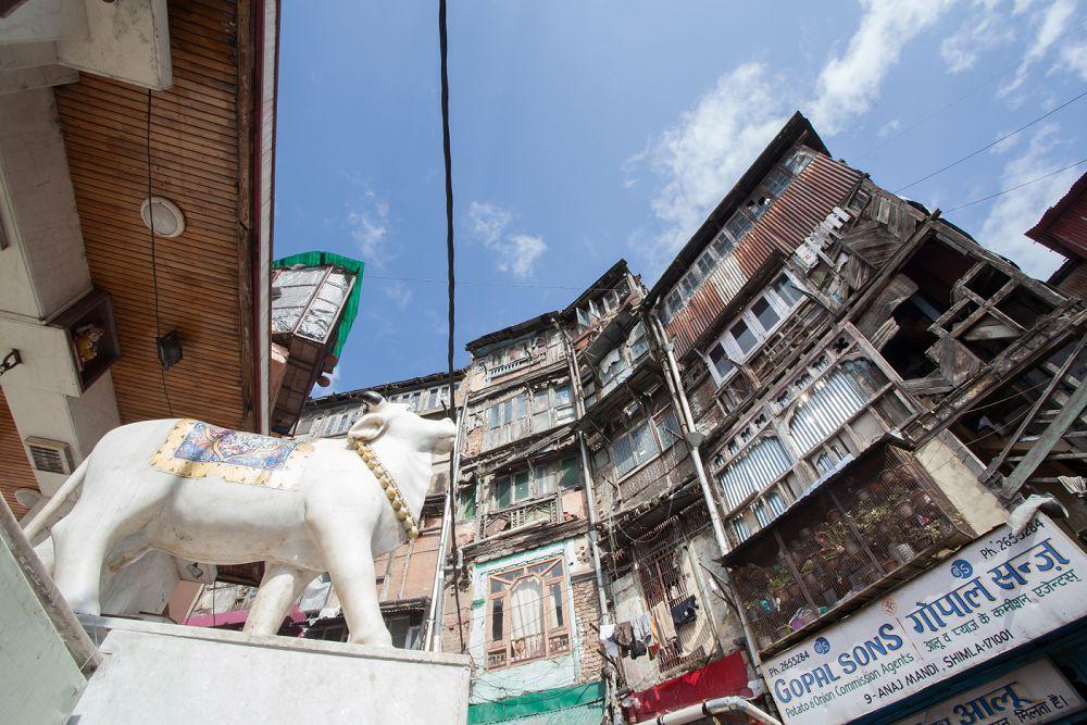 Shimla Travel Expressions Photography 064